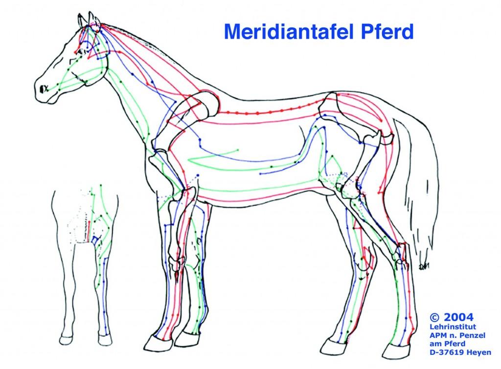 Akupunktmassage nach Penzel am Pferd, Wirbelsäulenbehandlung, Blockaden, Pferdeheilpraxis, Meridiantherapie, Energiefluss