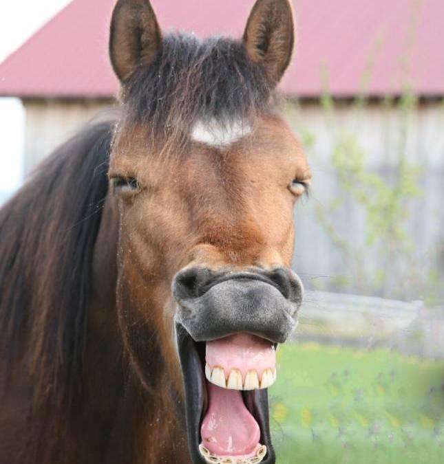 Gönne deinem Pferd auch mal Urlaub – mach eine Reitpause!