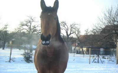 Atmet dein Pferd richtig? Atmet es überhaupt?