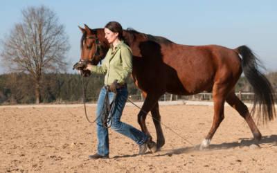 Wie Du merkst, ob sich dein Pferd ausbalanciert bewegt