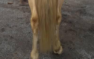 Yin Striche helfen gegen angelaufene Pferdebeine